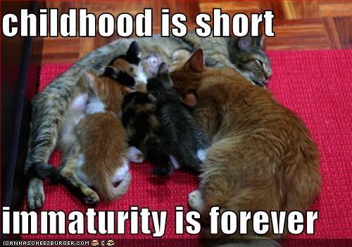 childhood cute immaturity kitten lolcats lolkittehs milk momcat nom nom nom - 1363481856