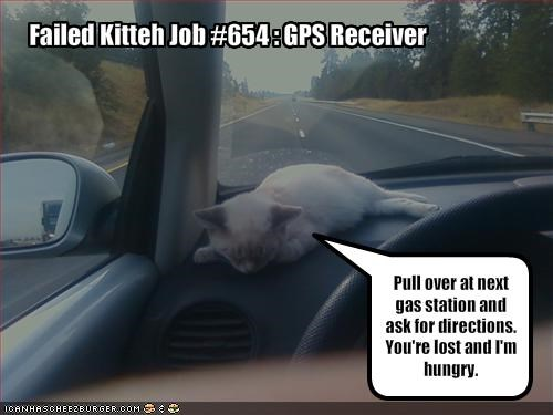 car cute FAIL gps hungry kitten lolcats lolkittehs lost - 1363487488