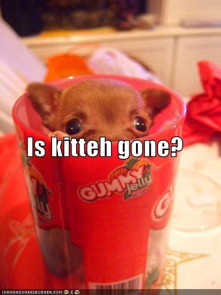 bukkit chihuahua cute hiding scared - 1363678976
