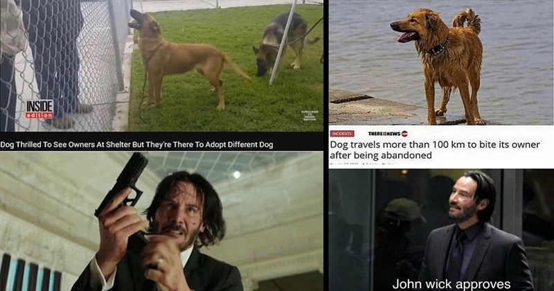 wholesome memes, funny memes, keanu reeves, keanu memes, john wick, john wick memes, dog memes, cute, funny, memes