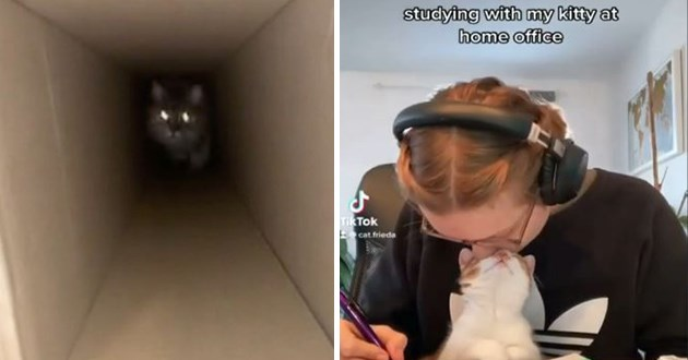 thumbnail includes two images - thumbnail includes two images - eyes flowing in dark corridor and a kitten looking up at her human lovingly