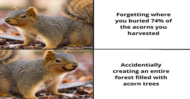 """wholesome animal memes - thumbnail of a squirrel and then a squirrel smiling """"Forgetting where you buried 74% of the acorns you harvested Accidentally creating an entire forest filled with acorn trees"""""""