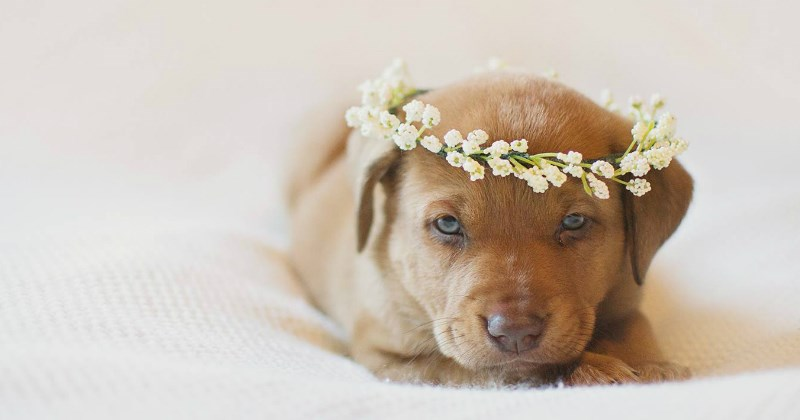 pictures baby list puppy cute - 1364741