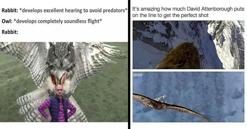 nature memes, animal memes, wildlife memes, david attenborough, planet earth, nature, plants, animals, funny memes, bird memes, frog memes, dank memes, funny, memes, wholesome memes