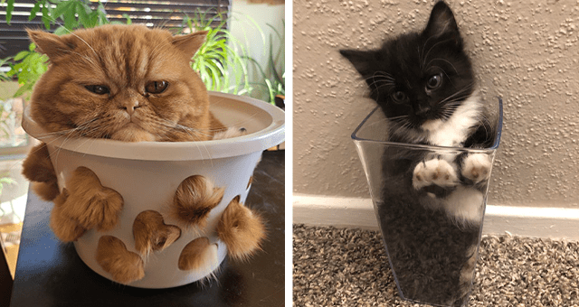posts about cats fitting into small spaces thumbnail includes a picture of a kitten in a glass and another of a cat inside of a bowl with holes
