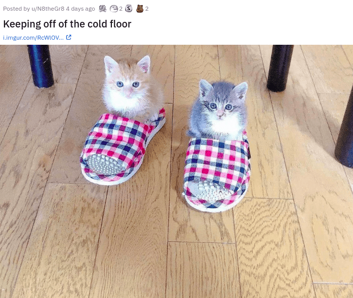 eye bleach nice things to look at cute baby animals cats and dogs adorable kittens and puppies small smol to cleanse your soul remedy cure family | Posted by u/N8theGr8 4 days ago 2 @2 3 Keeping off cold floor two tiny kittens sitting in slippers house shoes