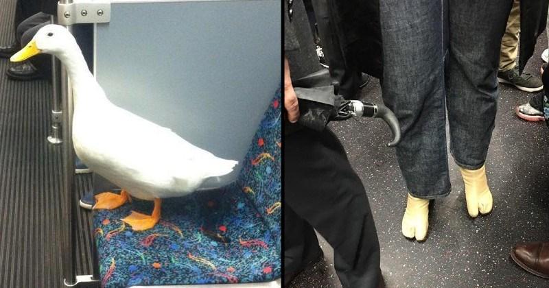 weird stuff seen on the subway