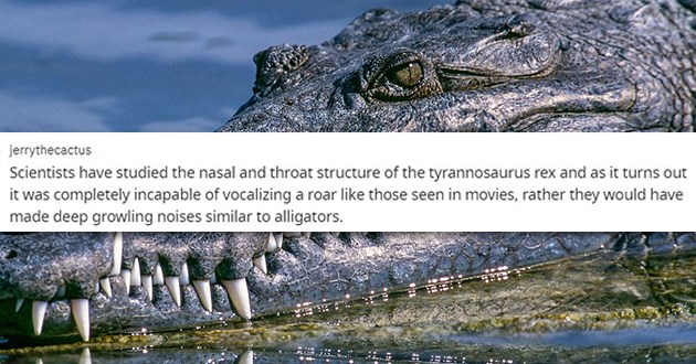 "fun and cool dinosaur facts - thumbnail of alligator ""Scientists have studied the nasal and throat structure of the tyrannosaurus rex and as it turns out it was completely incapable of vocalizing a roar like those seen in movies, rather they would have made deep growling noises similar to alligators."""