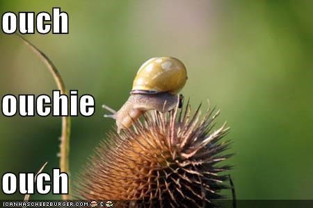 cute lolsnail lolsnails ouch snails - 1366156544