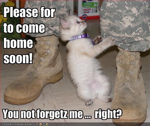 cute kitten lolcats lolkittehs soldier - 1366218496