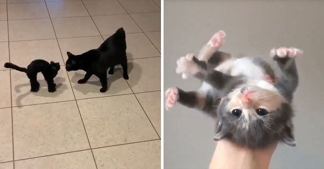 cute cat collection - thumbnail of two cat photos