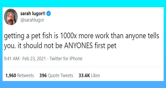 tweets about the difficulties about raising fish thumbnail includes one tweet 'Font - sarah lugor!! @sarahlugor getting a pet fish is 1000x more work than anyone tells you. it should not be ANYONES first pet 9:41 AM Feb 23, 2021 · Twitter for iPhone 1,960 Retweets 396 Quote Tweets 33.6K Likes'