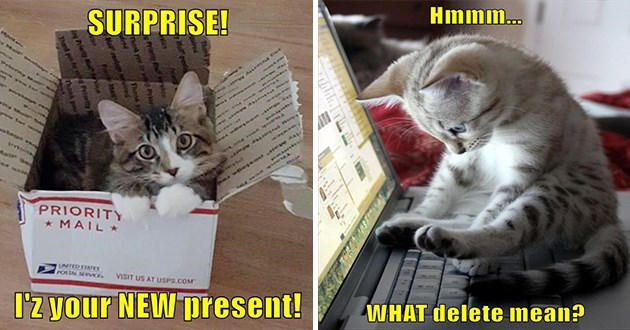 "ichc original cat memes lolcats - thumbnail includes two cat memes - kitten in box ""surprise! i iz your new present"" and a kitten on a laptop ""hmmm... what does delete mean?"""