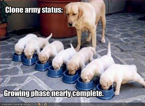 army cute labrador nom nom nom puppy - 1367762688