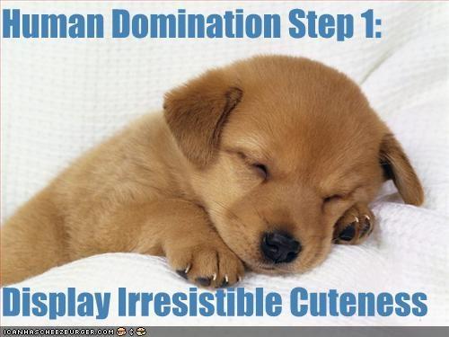 cute labrador puppy - 1368418560