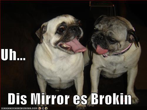 broken,mirror,pug
