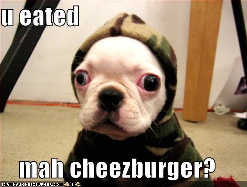 Cheezburger Image 1369128192