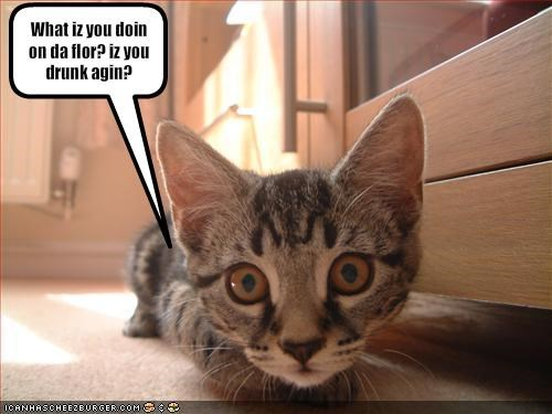 accusation curious drunk floor lolcats - 1369275648