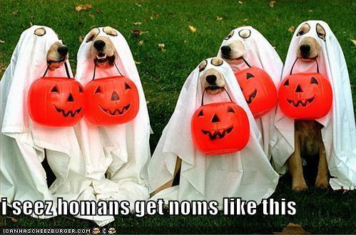costume ghost halloween labrador - 1369325824