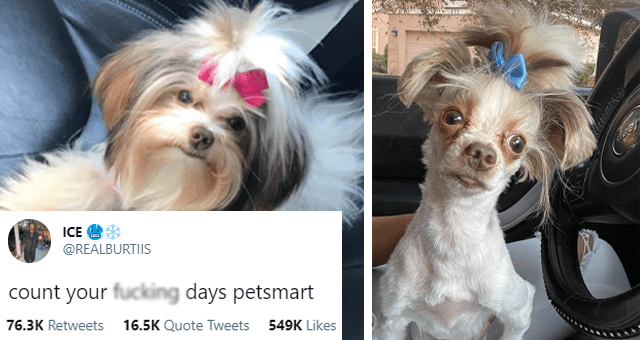 tweets of dogs getting bad haircuts thumbnail includes a two before and after pictures of a dog getting a haircut and one tweet 'Dog - ICE ... @REALBURTIIS count your fucking days petsmart 5:18 AM Feb 26, 2021 - Twitter for iPhone 76.3K Retweets 16.5K Quote Tweets 548.9K Likes'