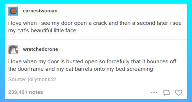 a collection of funny cat tumblr posts thumbnail includes one tumblr post 'Font - earnestwoman i love when i see my door open a crack and then a second later i see my cat's beautiful little face wretchedcrone i love when my door is busted open so forcefully that it bounces off the doorframe and my cat barrels onto my bed screaming Source: jollymonk42 239,421 notes'