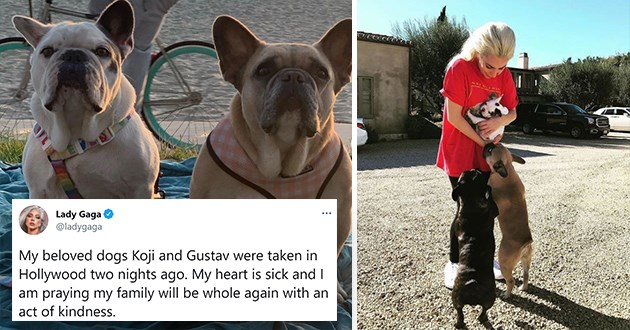 lady gaga's dogs were stolen and returned - thumbnail of lady gaga reunited with her dogs