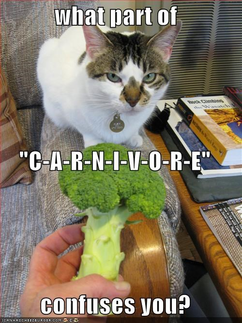 broccoli carnivore fud hungry lolcats yuck - 1369710336