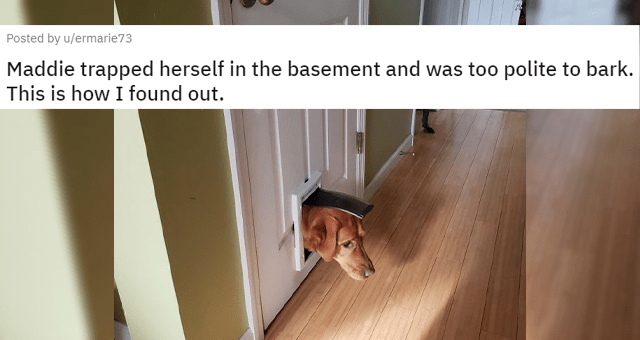 posts of funny dogs being themselves thumbnail includes a picture of a dog stuck in a basement cat door 'Maddie trapped herself in the basement and was too polite to bark. This is how I found out u/ermarie73'