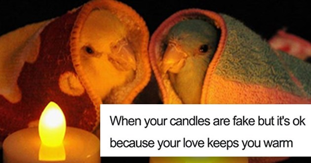 "wholesome animal memes - thumbnail of a two birds sitting by candlelight ""When your candles are fake but it's ok because your love keeps you warm"""