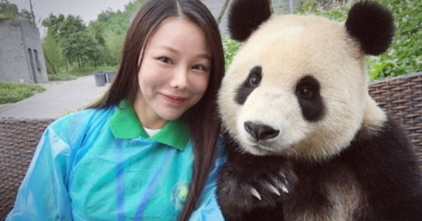 panda,panda bear,selfie stick,China,selfie