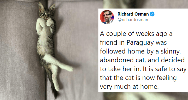 tweets about rescued pets feeling happy in their new homes thumbnail includes a picture of a kitten chilling on a couch with its belly up and one tweet 'Cat - Richard Osman ... @richardosman A couple of weeks ago a friend in Paraguay was followed home by a skinny, abandoned cat, and decided to take her in. It is safe to say that the cat is now feeling very much at home. 10:08 PM - Feb 28, 2021 · Twitter for iPhone 539 Retweets 70 Quote Tweets 21.1K Likes'