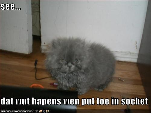 cute,electricity,kitten,lolcats,lolkittehs,socket,toe