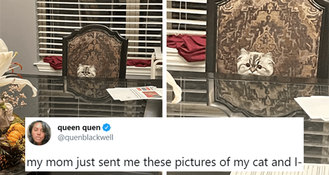 This week's collection of cat tweets thumbnail includes a picture of a confused cat peeking over a table and one tweet 'World - queen quen @quenblackwell ... my mom just sent me these pictures of my cat and I- 3:20 AM - Feb 26, 2021 - Twitter for iPhone 2,317 Retweets 61 Quote Tweets 55.5K Likes'