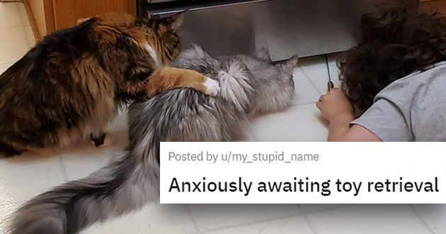 "pics and vids of the cutest animals of the week - thumbnail of two cats looking under kitchen appliance ""Anxiously awaiting toy retrieval"""