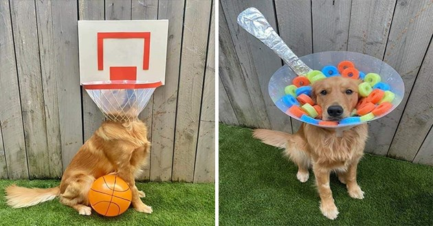 golden retriever's cone of shame is transformed into fun costumes - thumbnail of finn dressed as a bowl of fruit loops and a basketball basket