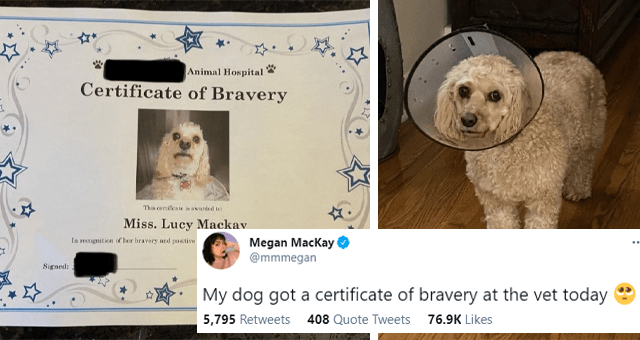 tweets about a dog getting a certificate of bravery at the vet's thumbnail includes two pictures including the certificate and a picture of a dog in a cone 'Dog - Megan Mackay O @mmmegan ... My dog got a certificate of bravery at the vet today Animal Hospital Certificate of Bravery Theieste ia ded Miss. Lucy Mackay te remgnitien of her hravry and pasitive sttaud dering her stay with e Signed: Date a 6:18 AM Mar 2, 2021 · Twitter for iPhone 5,758 Retweets 407 Quote Tweets 76.5K Likes''