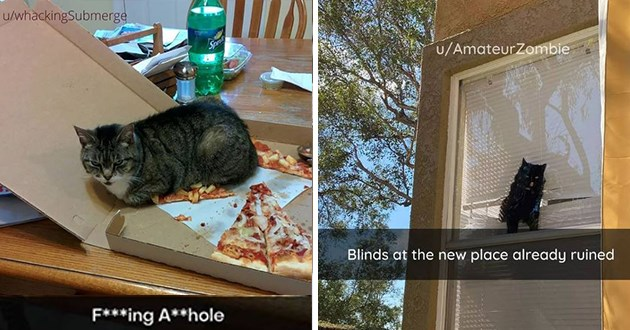 "fresh cat snaps - thumbnail of cat sitting on pizza slice ""F***ing A**hole"" and image of cat at window ""Blinds at the new place already ruined"""