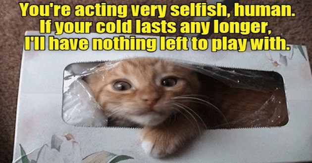 "ichc original cat memes lolcats - thumbnail of kitten in tissue box ""You're acting very selfish, human. If your cold lasts any longer, HI have nothing left to play with."""