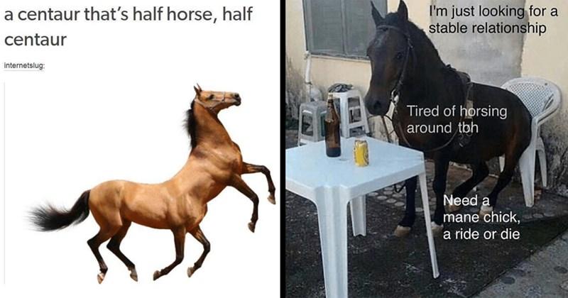 horse memes, horses, animal memes, funny memes, shitposts, dank memes, dumb memes, weird memes, funny, memes, animals, tumblr memes, dank memes