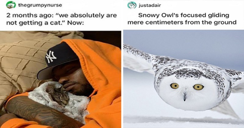 wholesome animal stories and cool animal pics - thumbnail of man cuddling with kitten and an owl flying low to the ground
