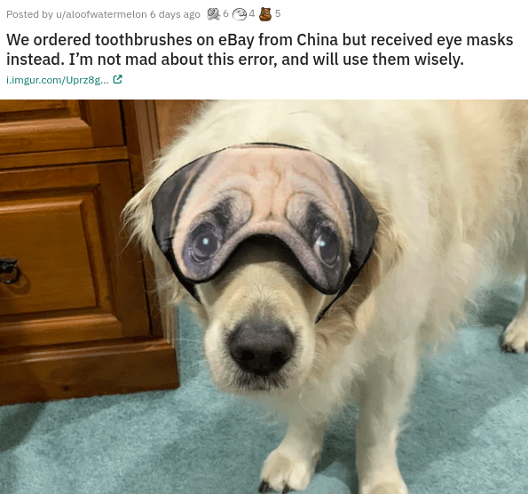 funny content random hilarious pics memes and web comics dogs animals creative people entertaining stupid job work | Posted by u/aloofwatermelon 6 days ago 6 ordered toothbrushes on eBay China but received eye masks instead not mad about this error, and will use them wisely