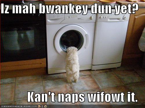 blanket havanese laundry nap puppy - 1375618816