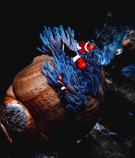 photos taken of the ocean and its life