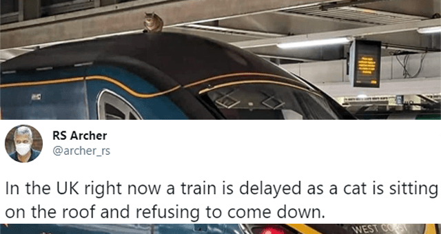 this week's collection of animal tweets thumbnail includes a picture of a cat sitting on top of a train and one tweet 'Train - RS Archer @archer_rs In the UK right now a train is delayed as a cat is sitting on the roof and refusing to come down. AVANTI WEST COST 390 117 5:11 PM · Mar 3, 2021 - Twitter Web App 20.7K Retweets 3,979 Quote Tweets 87.8K Likes'