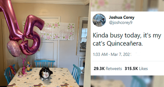 tweets about people celebrating senior pets' special birthdays thumbnail includes a picture of a cat on a table and balloons spelling the number '15' and one tweet 'Furniture - Joshua Corey @joshcorey9 ... Kinda busy today, it's my cat's Quinceañera. 1:33 AM Mar 7, 2021 Twitter for iPhone 29.3K Retweets 1,117 Quote Tweets 315K Likes'