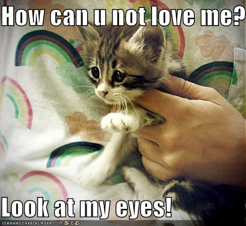 How can u not love me?  Look at my eyes!