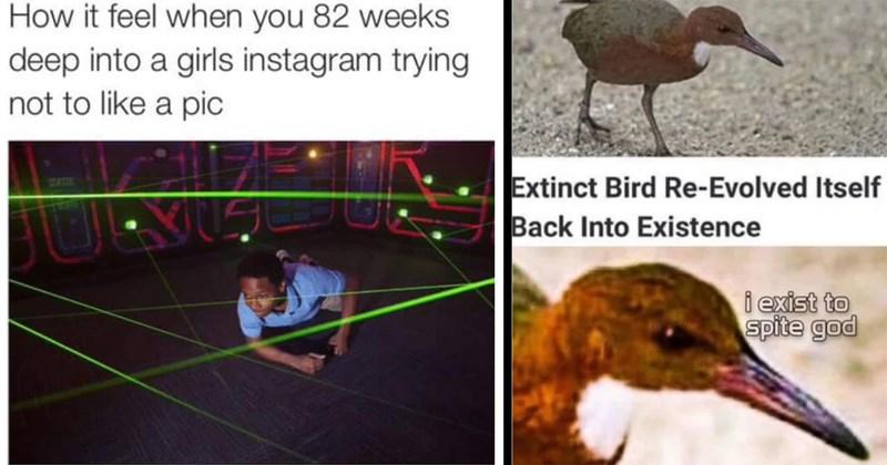 random memes, meme dump, funny memes, memes, dumb memes, relatable memes, stoner memes, nerdy memes, funny tweets, twitter memes, dank memes, lol, funny