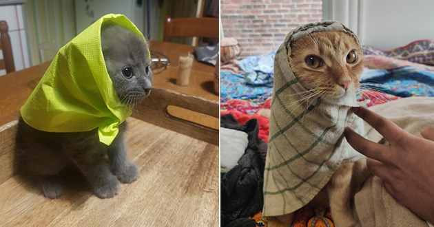 funny babushkats - thumbnail of two cats in babushka headwraps