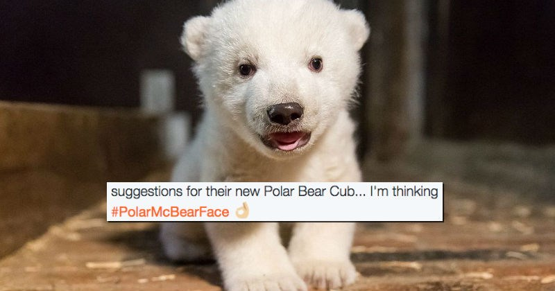 twitter,polar bear,cub,zoo,name