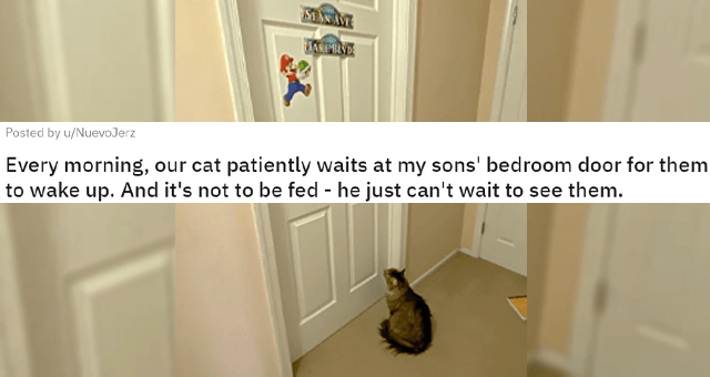 reddit comments about cats and their weird reactions to closed doors thumbnail includes one picture of a cat staring at a closed door 'Cat - 79 45 93 3 49 Posted by u/NuevoJerz 3 days ago Every morning, our cat patiently waits at my sons' bedroom door for them to wake up. And it's not to be fed - he just can't wait to see them. SEAN AVE JAKE BLVD'
